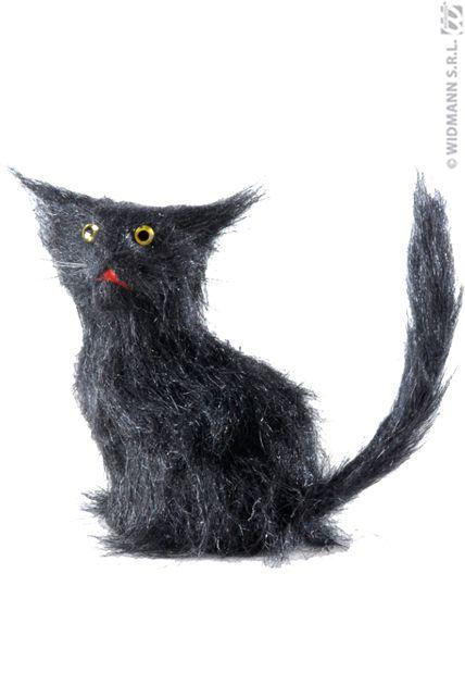 www noir chatte photo com