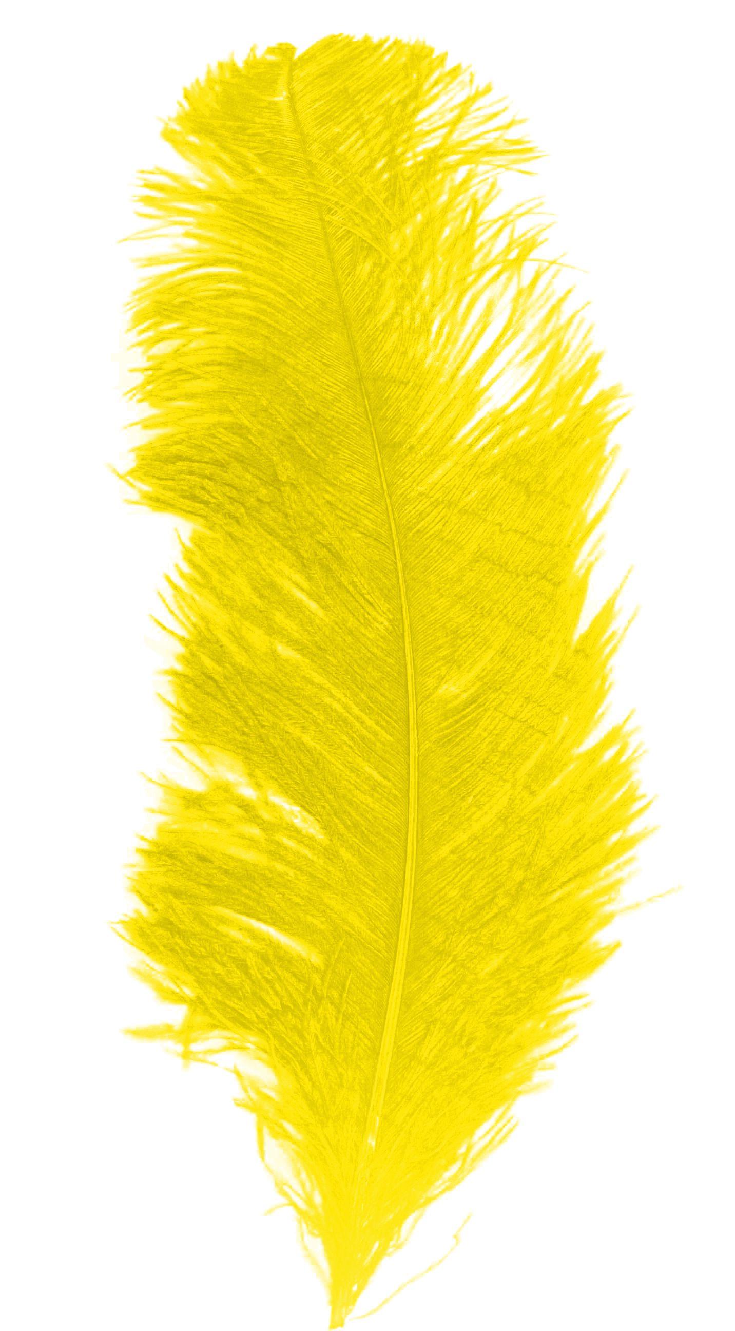 plume autruche adulte